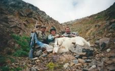 Trophy BC Mountain Goats - Nanikalakeoutfitters.com