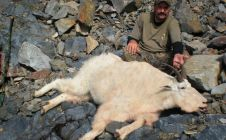 British Columbia Trophy Mountain Goat Hunts - Nanikalakeoutfitters.com